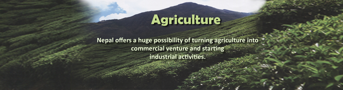 Agriculture Potential in Nepal